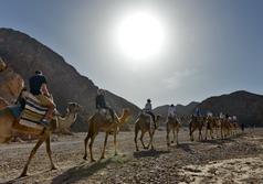 תמונה של טיול גמלים שקיעה וגבינות כשעתיים