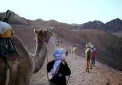 תמונה של טיול גמלים לחצי יום כ- 4 שעות
